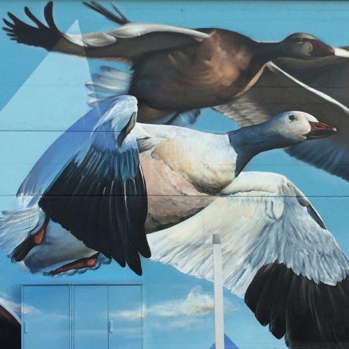 Muurschildering van ganzen op viaduct Eindhoven